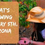 A Gardening Video – Arizona Garden in January, 2018
