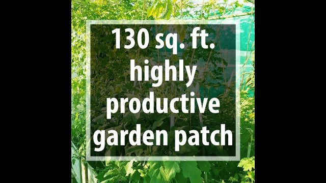 130 Square feet, Highly Productive Rooftop Garden Patch