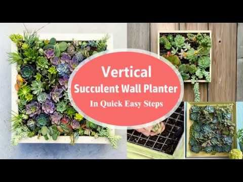 Vertical Succulent Wall Planter In Quick Easy Steps