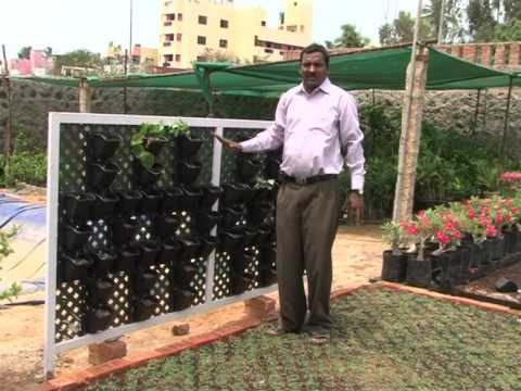 Terrace lawn, vertical wall garden padmanaban 9842224444