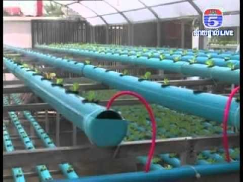 Hydroponic in Cambodia by TV  5 – Khmer agriculture 2013