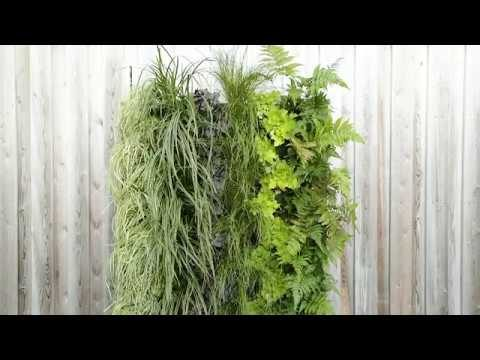 How to create a living wall in your garden or home