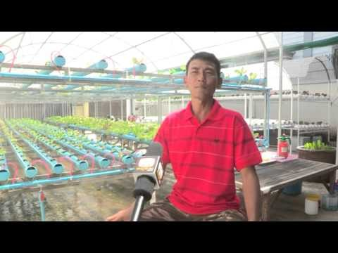 Hydroponic in Cambodia by Joobpages Hangmeas TV on 18-7-13
