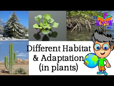 CBSE Science – Where Plants Grow & How they Adapt to their Habitats
