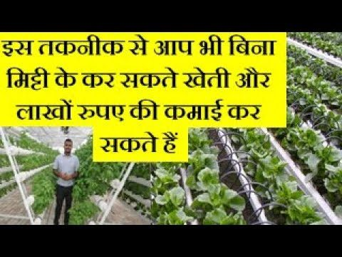 Hydroponic Farming – Hydroponic Soil-less Farming Business idea In Hindi