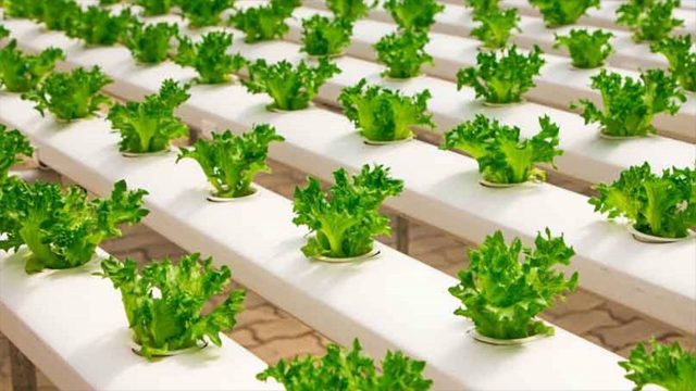 Role Of Rockwool In Hydroponics Medium Plants- Its Merits And Demerits