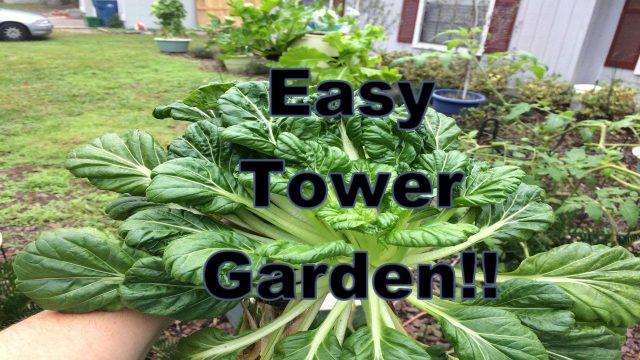 Tower Garden Reality Check