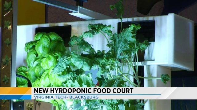 New hydroponic food court at Virginia Tech brings new meaning to fresh