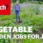 Vegetable gardening jobs for June – Which? Gardening