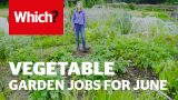 Vegetable gardening jobs for June – Which? Gardening
