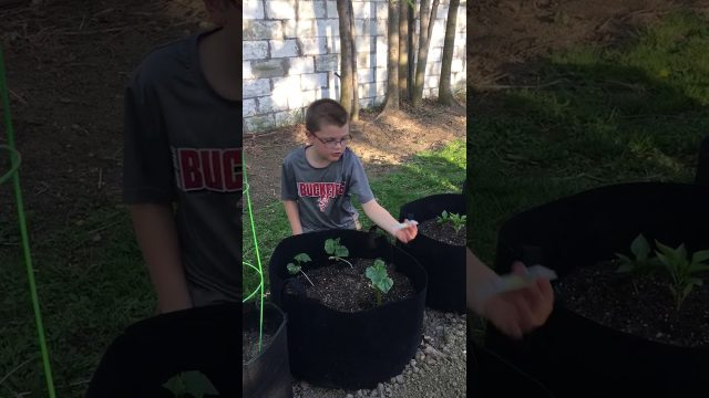 Jacob sharing information on his garden.