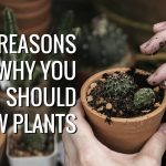 Benefits of Gardening As A Hobby and Why You Should Be A Gardener