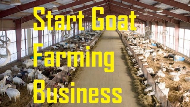 7 Reasons Why You Should Start Goat Farming Business
