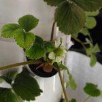 Vertical Soiless Farming -Hydroponics – Hamari Krishi