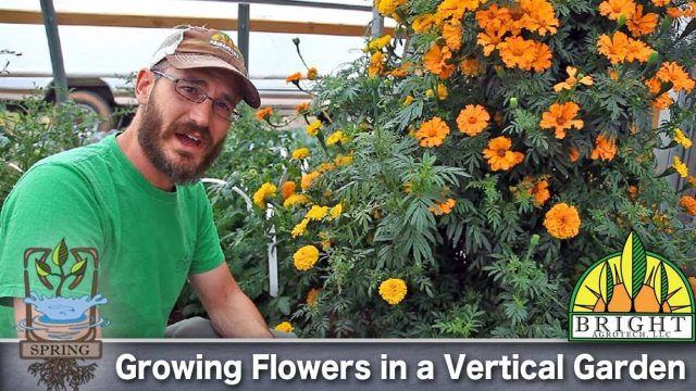 Can you grow flowers in a vertical garden?
