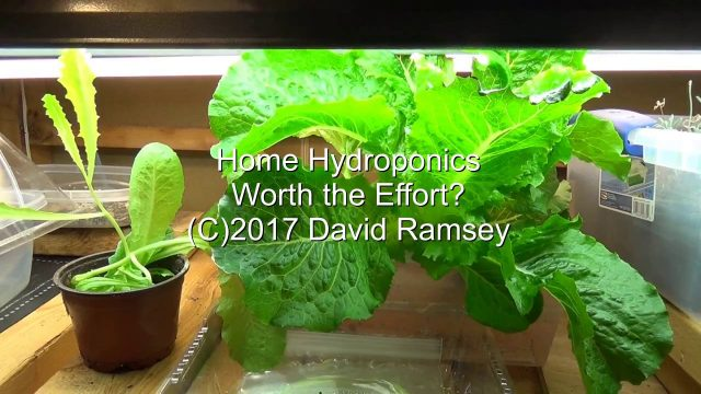 Home Hydroponics – Worth the Effort?