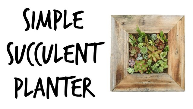 How to Plant a Succulent Wall Planter