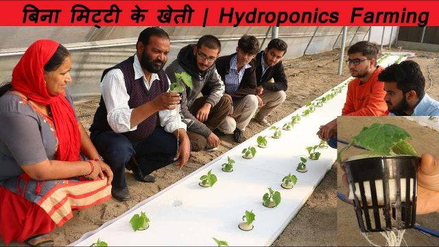 Hydroponics Technology, Growing plants without Soil, low investment and high production