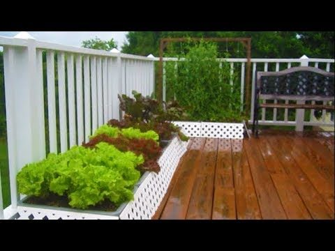 June 12th Container GARDEN UPDATE walkthru tour Organic Vegetable Gardening how to plant