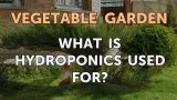 What Is Hydroponics Used for?