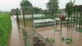 Flash Flood.. Vegetable Garden Under Water.