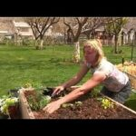 Vegetable Gardening : How to Grow Vegetables in a Limited Space