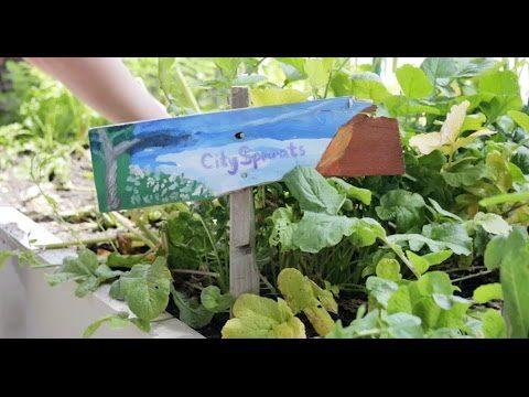Give a Kid a Garden
