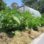 Everyone Can Grow A Garden 2018 #15: Vegetable Garden Tour (June)