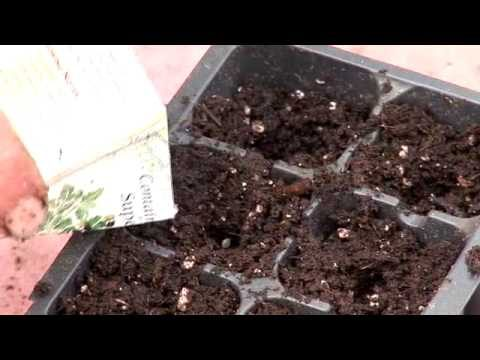 Vegetable Seed Starting