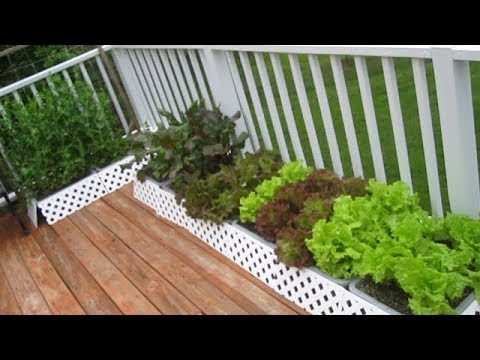 Organic Container Garden Update MAY 20th raw food diet vegetable gardening how to plant grow