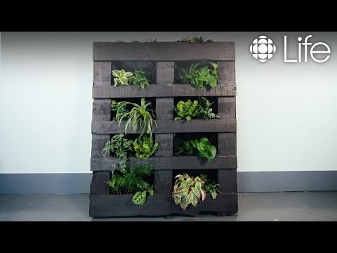 How to Make a Vertical Garden | CBC Life