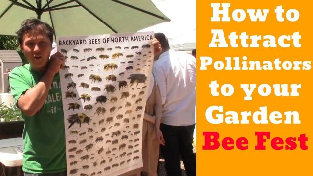 Grow More Vegetables by Attracting Pollinators To Your Garden: Bee Festival