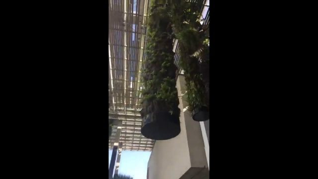 Dangers of Hydroponic Living Walls