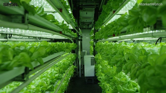 Here's how indoor farming can help feed 9.1 billion people by 2050