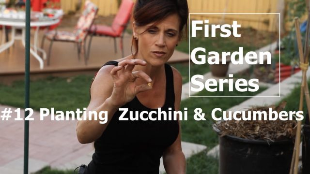 First Garden #12 – Planting Zucchini and Cucumbers and Easy Trellis Ideas