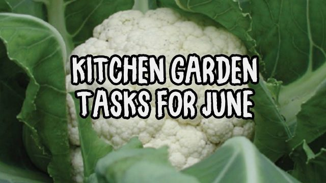 Vegetable Gardening Tasks for June in the Kitchen Garden