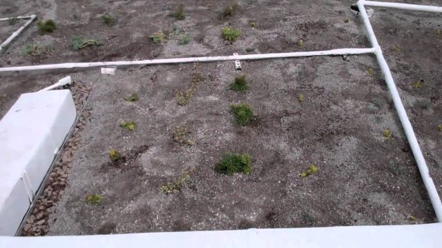 Green Roof Palm Springs