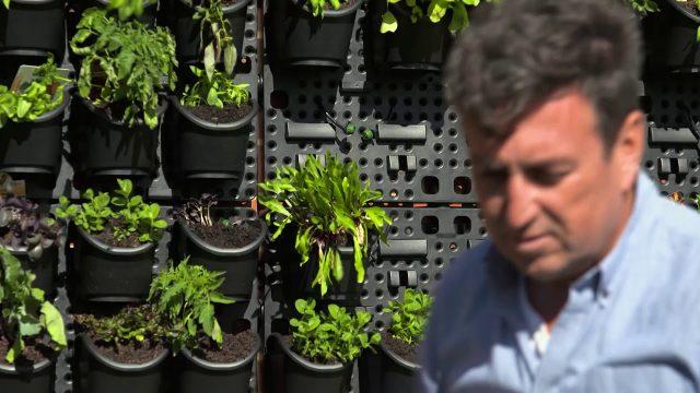 The Garden Gurus – Holman Greenwall Vertical Gardening Kit