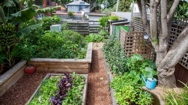 Get Healthy Food With Minimum Space With Hydroponic Gardening – Gardening Tips