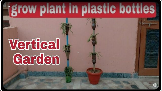 How to make vertical garden, How to grow plant in plastic bottles, DIY plastic bottles