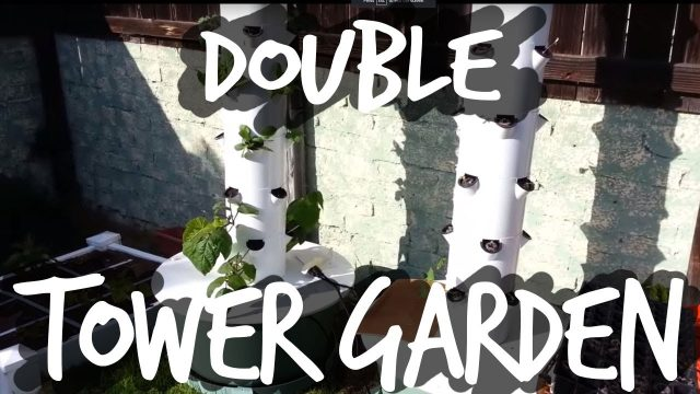 Growing With Two Tower Gardens