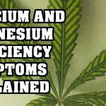 Magnesium and Calcium Deficiency in Cannabis EXPLAINED