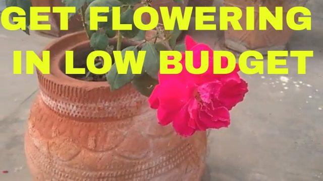 Do it yourself tamilnadu government program for terrace gardening low budget gardening how i do my gardening solutioingenieria Image collections