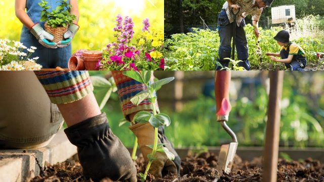 Advantages And Benefits Of Gardening