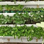 [ Watch Now ] 7 Ideas To Growing a VERTICAL GARDEN – Gardening Tips