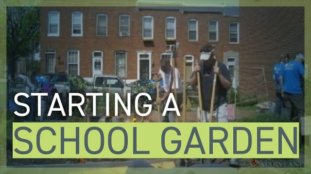 Guide to Starting a School Garden