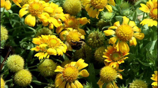 Become a Crittenden County Master Gardener