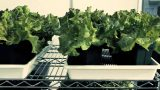 Panasonic Factory Solution Asia Pacific's First Indoor Vegetable Farm in Singapore