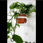 Hanging Plants House Plant Indoor Wall Hanging S | Picture Set Of House Office Or Garden Decor Plan