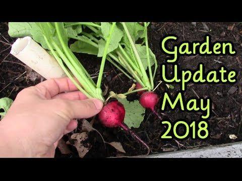 Backyard Vegetable Garden ~ May Update and Walk Through